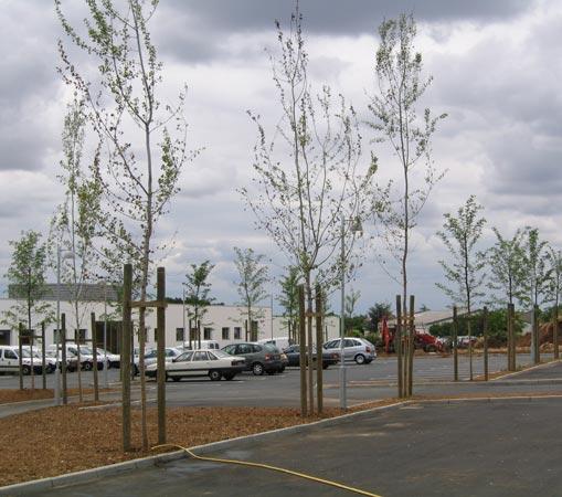 Plantation d'arbres, haies et arbustes